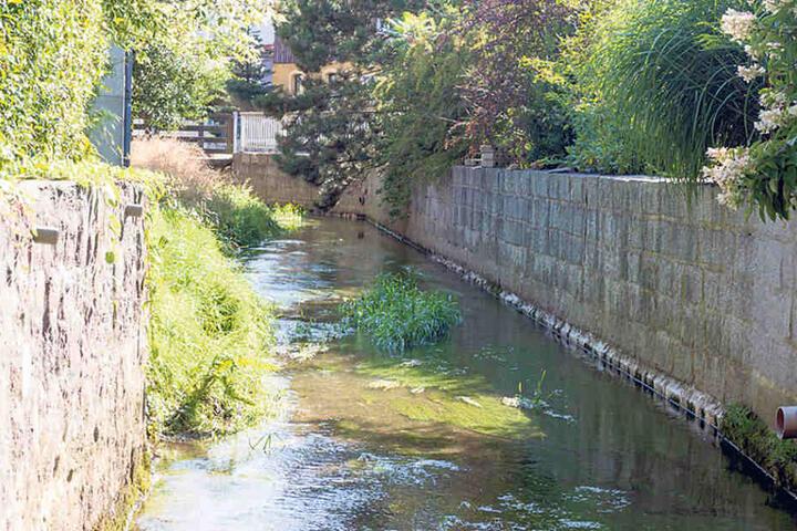 Offenbar landen Toiletten-Abfälle im Regenwasserkanal, werden so in die Pulsnitz eingespült.