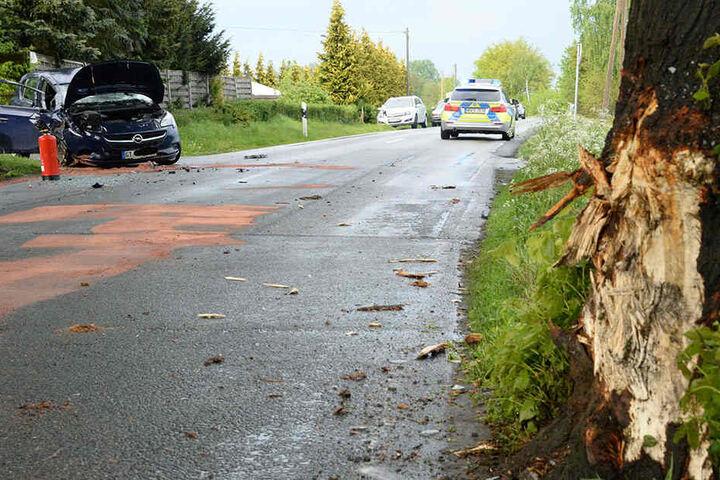 Es ist deutlich zu erkennen, mit welcher Wucht das Auto in den Baum krachte.