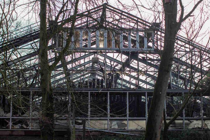 Das Gerippe des abgebrannten Affenhauses blieb stehen.