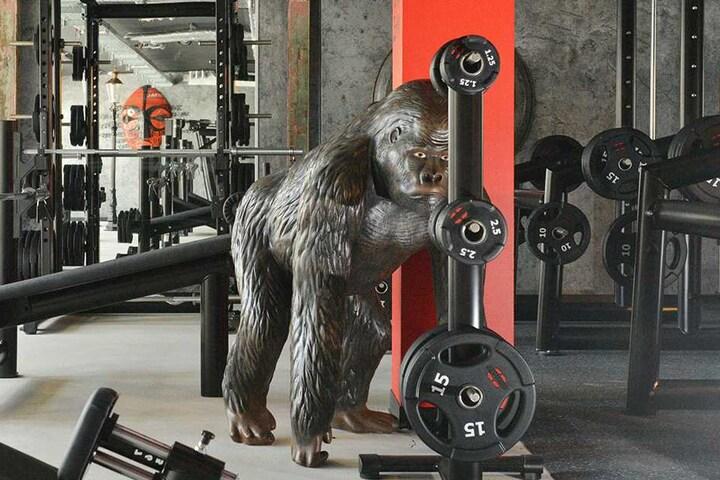 Exotisch: Im Freihantelbereich wacht eine lebensgroße Gorilla-Figur über die künftigen Studiogänger.