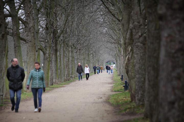 Allee mit MenschenBis zum Beginn der Gartensaison Ende März wird kostenlos im Park spaziert.
