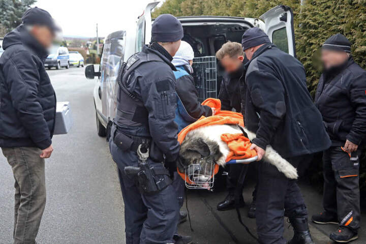 Der Familienhund wurde betäubt und in ein Tierheim gebracht.