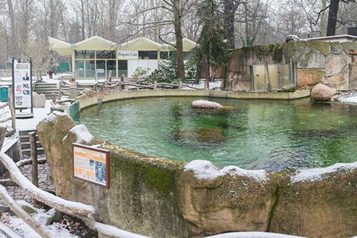 Verwaist ist auch die Anlage der Pinguine. Auch sie dürfen nicht in ihr  geliebtes Becken.