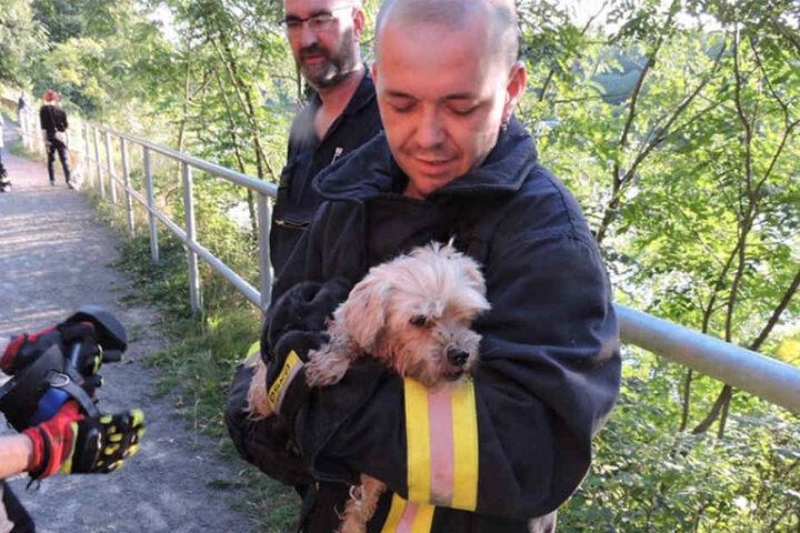Nach über einer halben Stunde fanden die Kameraden der Freiwilligen Feuerwehr Grimma den kleinen Hund.