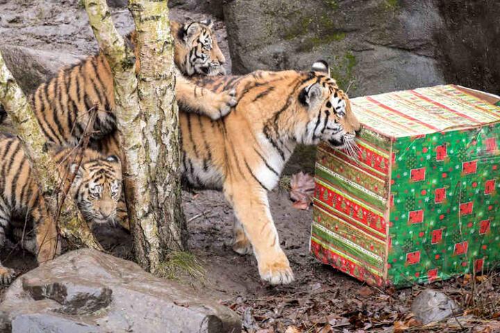 Mit seiner Mutter und seinen Geschwistern erkundigte Vitali die Nikolausgeschenke. (Archivfoto)