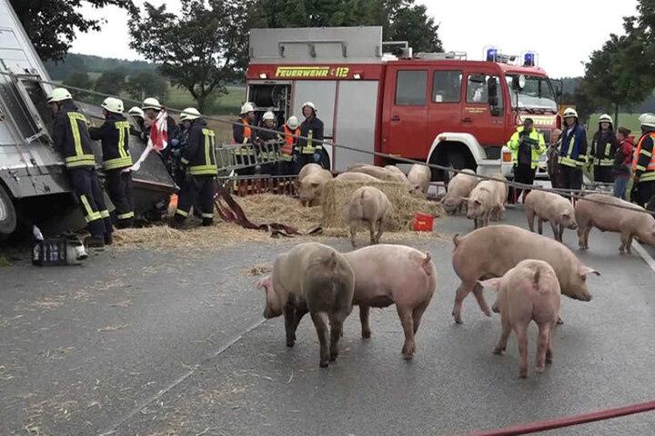 Die Feuerwehr verwandelt die Fahrbahn kurzerhand in einen Outdoor-Schweinestall.