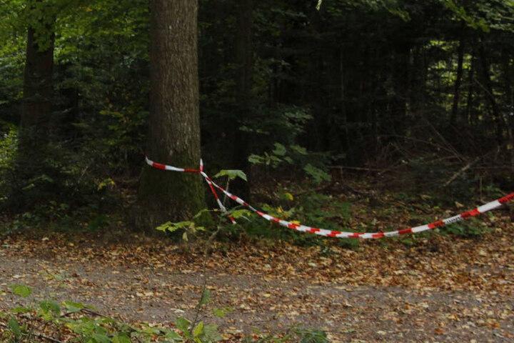 An diesem Waldstück fand man wohl die Leiche des Jägers.