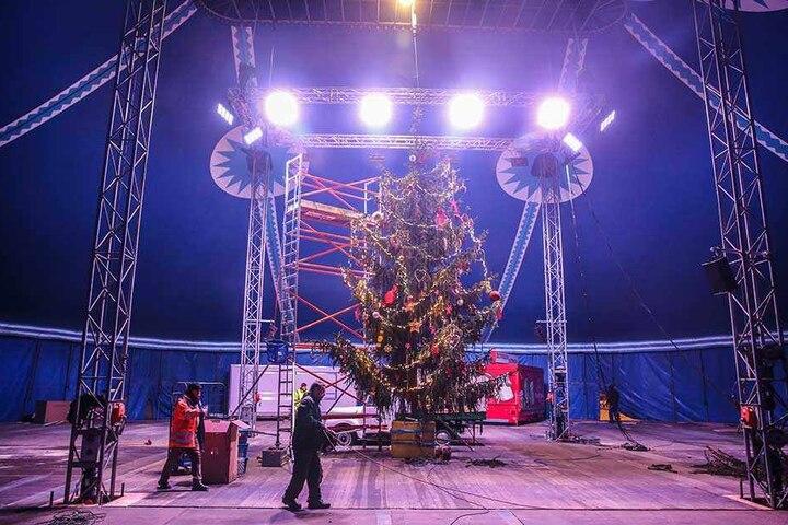 Der große Weihnachtsbaum im Vorzelt des Zirkus. Erst die dritte Fichte genügte allen Anforderungen.