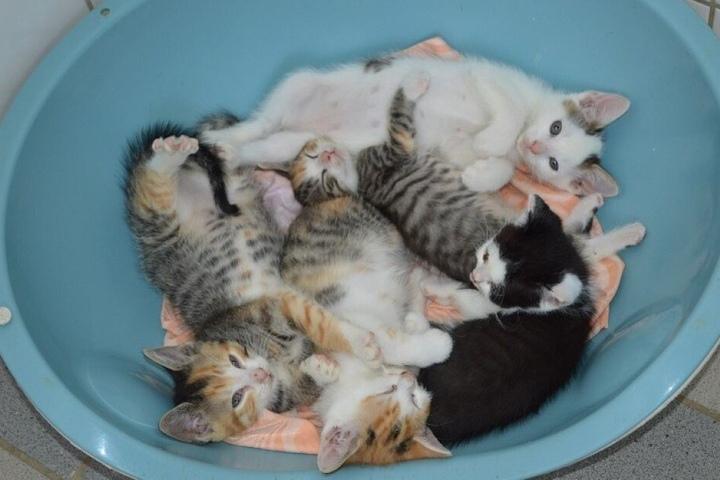 Täglich bekommt das Tierheim mehrere kleine Kätzchen.
