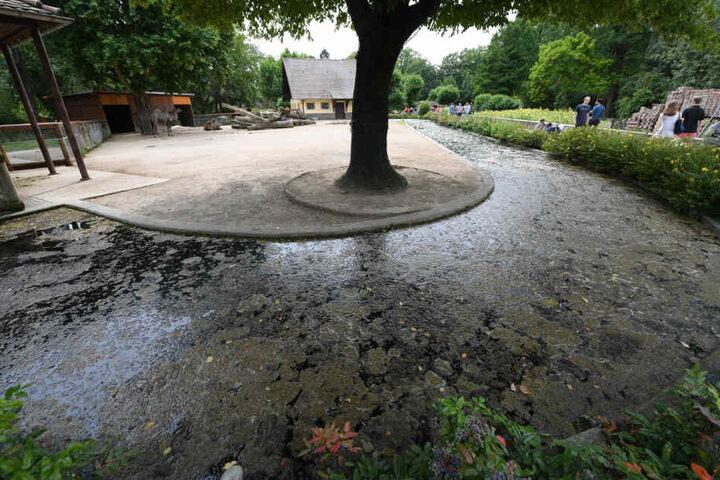 Der Graben war vor dem Unfall nur von Pflanzen und einem Drahtseil geschützt.