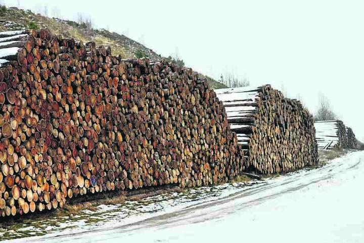 Schon jetzt türmen sich die Stämme entlang von Wald- und Feldwegen. Doch da kommt noch mehr...