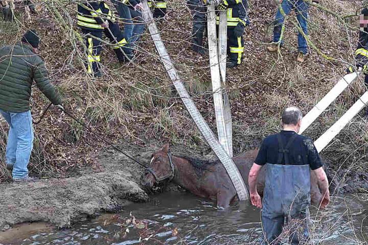 Mit Feuerwehrschläuchen konnte das Tier geborgen werden.