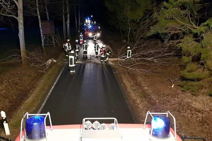 Auch im Vogtland kam es zu vereinzelten Einsätzen. Hier knickte ein Baum bei Falkenstein und um landete auf der Straße.