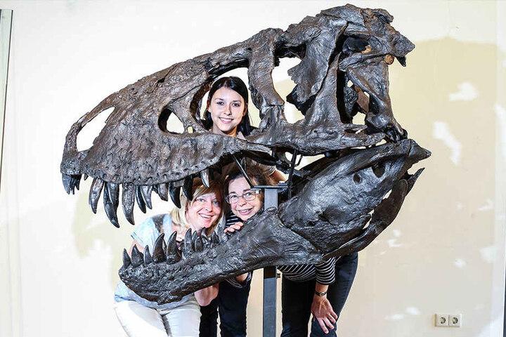 Hinter dem Schädel von T. rex Tristan können sich viele kluge Köpfe verstecken, z.B. die Museums-Mitarbeiter Carolin Brinner (29, o.), Sabine Dittrich (45, u.l.) und Cornelia Wiesener (55).