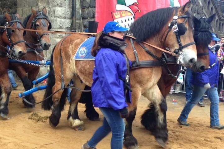 Eine Pferdekutsche ging beim Kölner Rosenmontagszug durch, mehrere Zugbesucher wurden verletzt . (Symbolbild)
