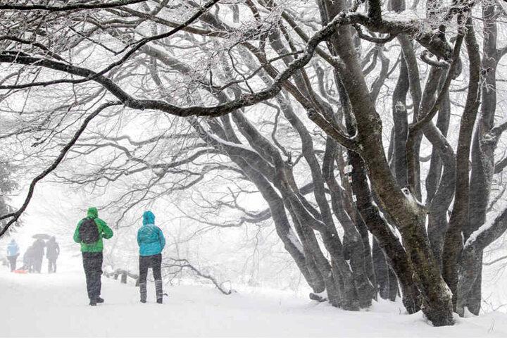 Im Taunus bei Frankfurt fiel am Sonntag sehr viel Schnee. Dennoch waren Ausflügler dort unterwegs und genossen die weiße Pracht.