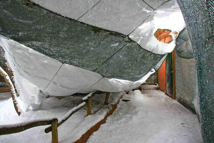 Die Netze reißen unter der Belastung des schweren Schnees.