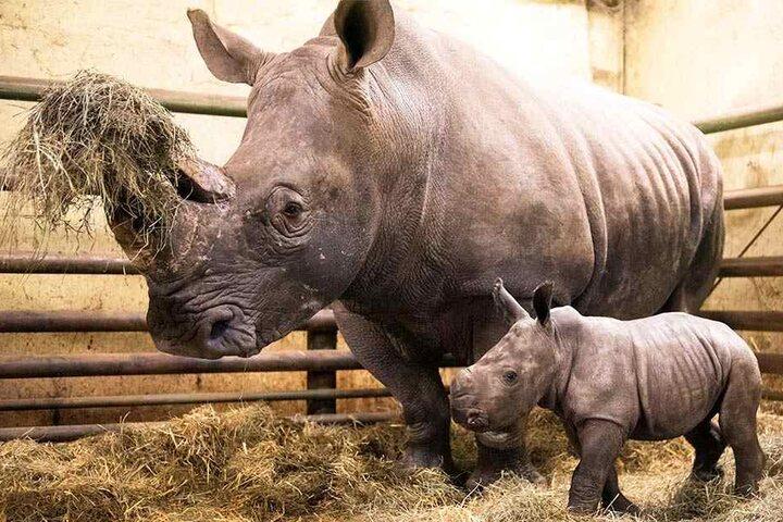 Bei der Geburt wog die kleine Moana 30 Kilogramm.