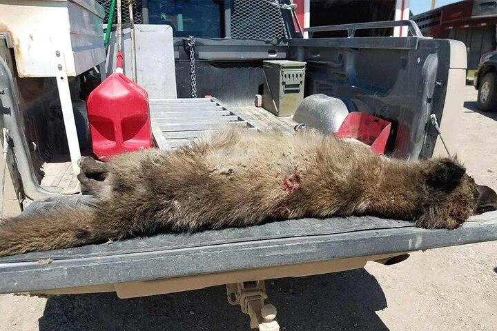 Das Tier wurde erschossen.