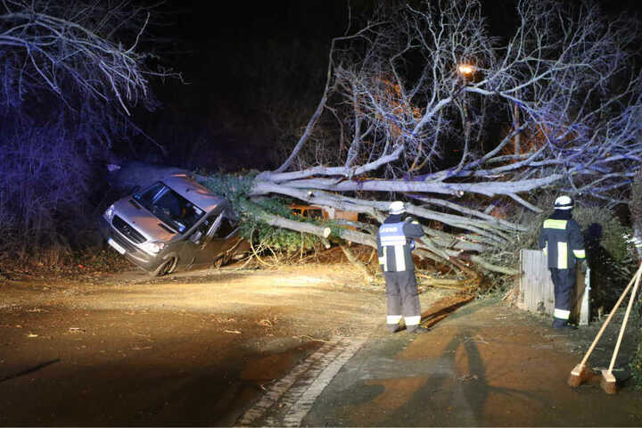 Der Baum begrub den Mercedes komplett unter sich.