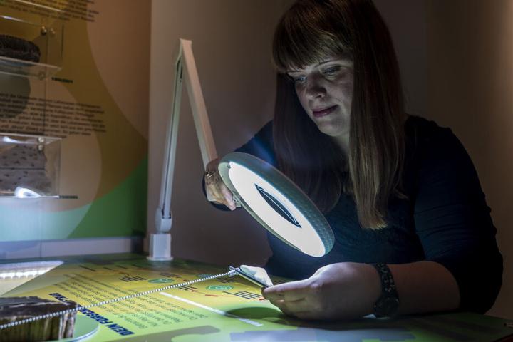 Museumspädagogin Isabelle Ehle (33) nimmt am Fossilienbestimmungs-Tisch versteinerte Tiere unter die Lupe.