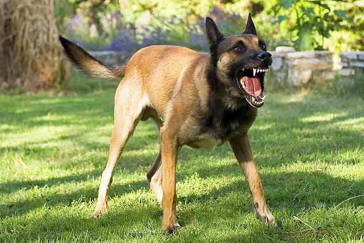 Nachdem er das Reh tötete, ging der Hund auf die Polizisten los. (Symbolbild)