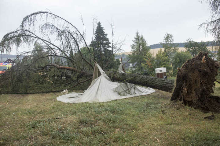 Ein Baum stürzte auf ein Zelt, in dem sich gerade zwei Personen aufhielten. Sie wurden leicht verletzt.