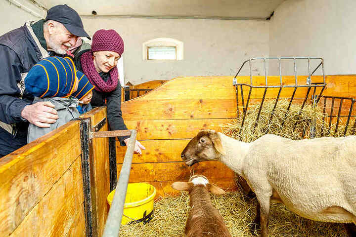 """Im Weidegut Colmnitz können Besucher jetzt die """"Kinderstube"""" von niedlichen Osterlämmern besuchen."""