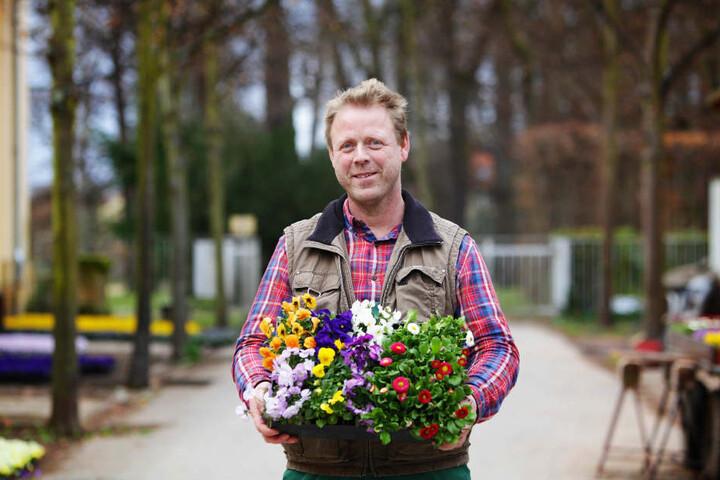 Herr der Blüten: Gartenmeister Thomas Riedel von Schloss Pillnitz pflanzt  derzeit mit seinen Kollegen Unmengen Primeln und Stiefmütterchen.