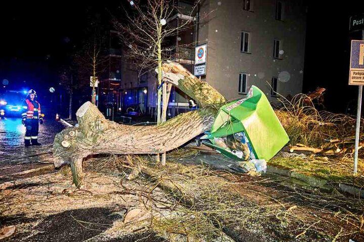 Eine Weide hat in Pirna einen Container zertrümmert.
