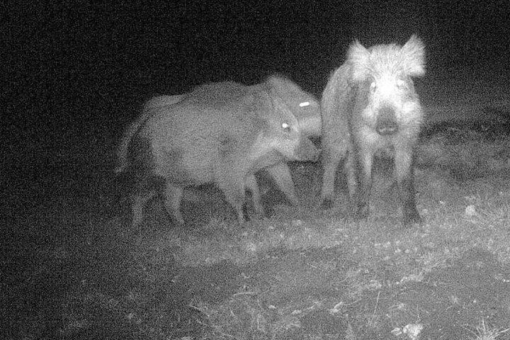 Die Überwachungskamera nahm die Tiere auf frischer Tat auf.