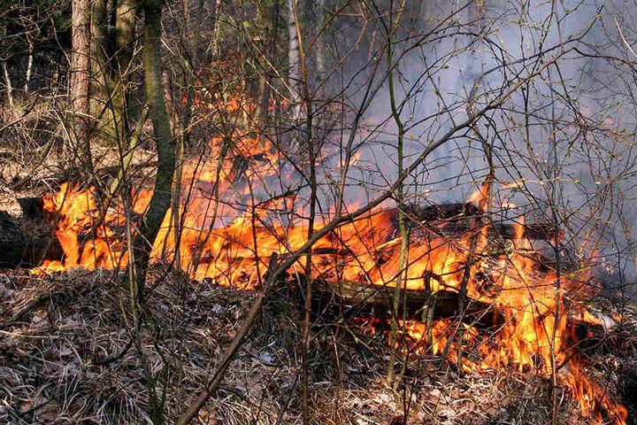 Feuer im Friedewald! Viele Tausend Quadratmeter Natur wurden zerstört.