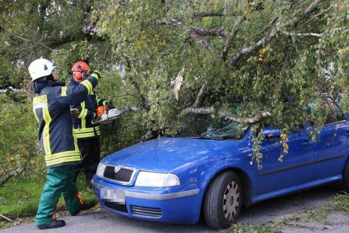 In Herford fiel eine Birke auf ein geparktes Auto.