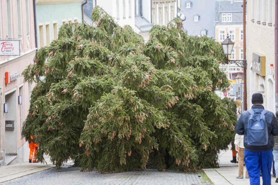 Der Baum musste durch die engen Gassen transportiert werden.