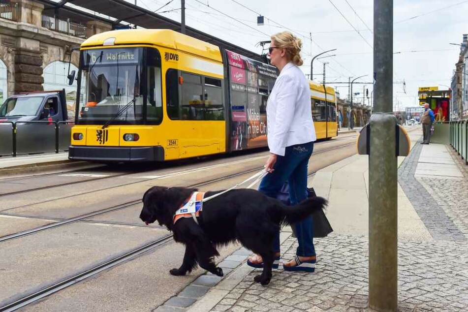 Beim Überqueren der Straße vertraut Carola Engelmann ihrem Blindenführhund Thor blind.