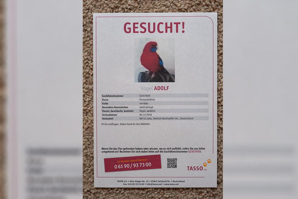 Mit diesen Plakaten wird in der Region nach dem exotischen Flattermann gefahndet.
