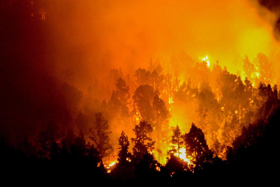 Offenbar hat ein glimmender Gegenstand einen Waldbrand südöstlich von Bad Düben ausgelöst (Symbolbild).