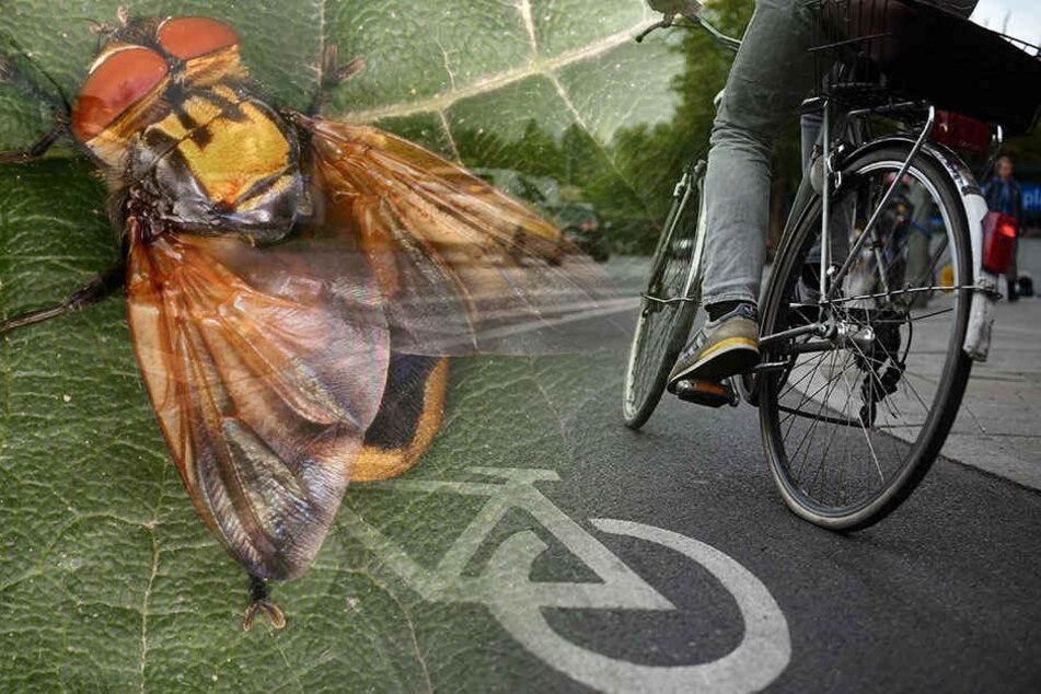 Klein, aber oho: Was auch immer den Radfahrer ablenkte, sein derzeitiger Aufenthaltsort ist unbekannt. (Symbolbild)