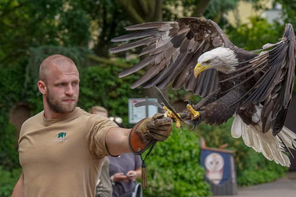 Flugschau im Kölner Zoo: Exotische Vögel zeigen spektakuläre Manöver