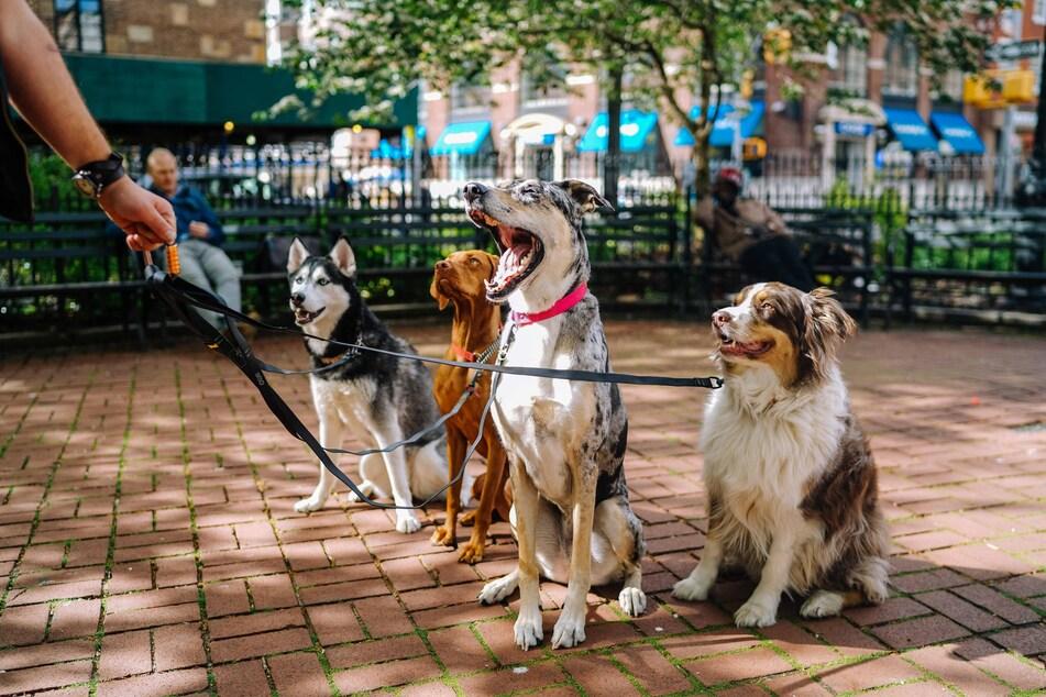 Ob ein Hund zwingend eine Haftpflicht benötigt, hängt von Bundesland und Rasse ab.