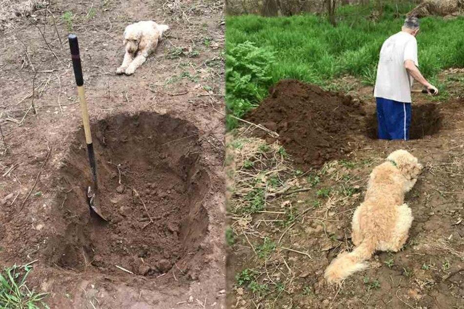 Kurz vorm Einschläfern: Hund sieht Herrchen beim Ausheben seines Grabes zu, bis es dramatisch wird