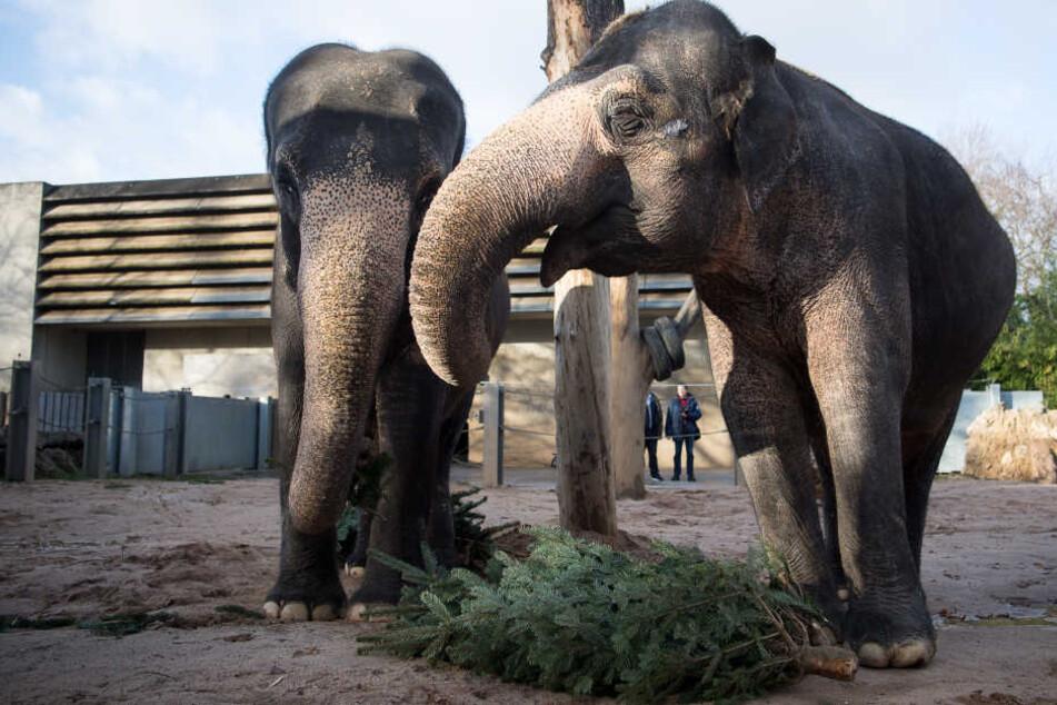 Die Wilhema möchte sich als zoologisch-botanischen Garten weiterentwickeln.