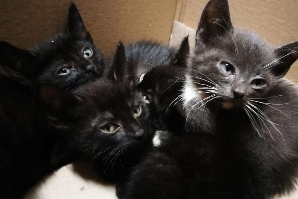 Die vier Katzen wurden am Straßenrand ausgesetzt.