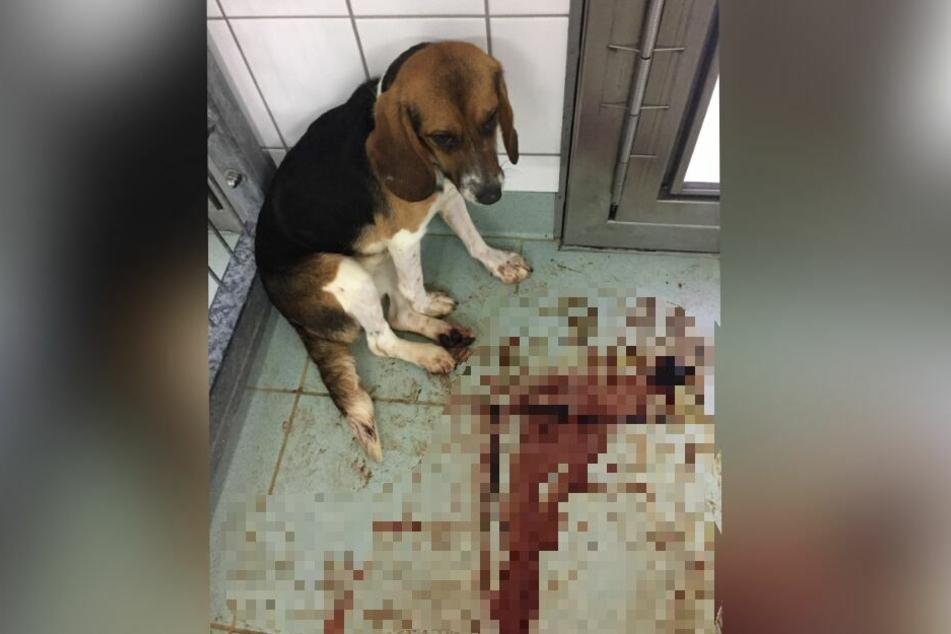 Ein Hund kauert in seinem blutverschmierten Zwinger.
