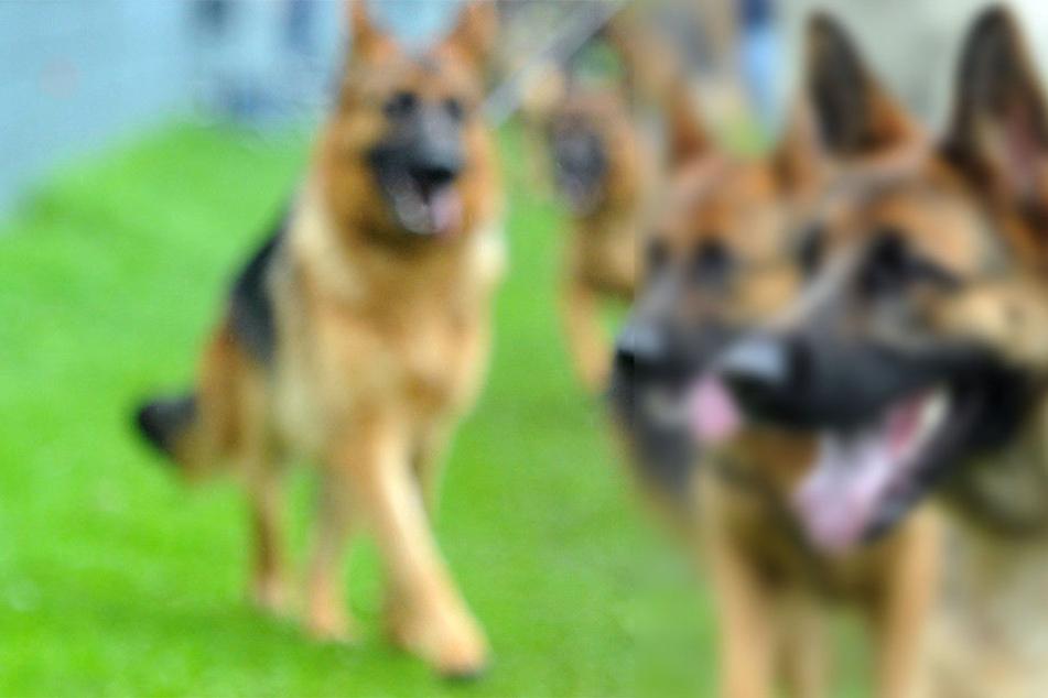 Das ist die beliebteste Hunderasse in Deutschland