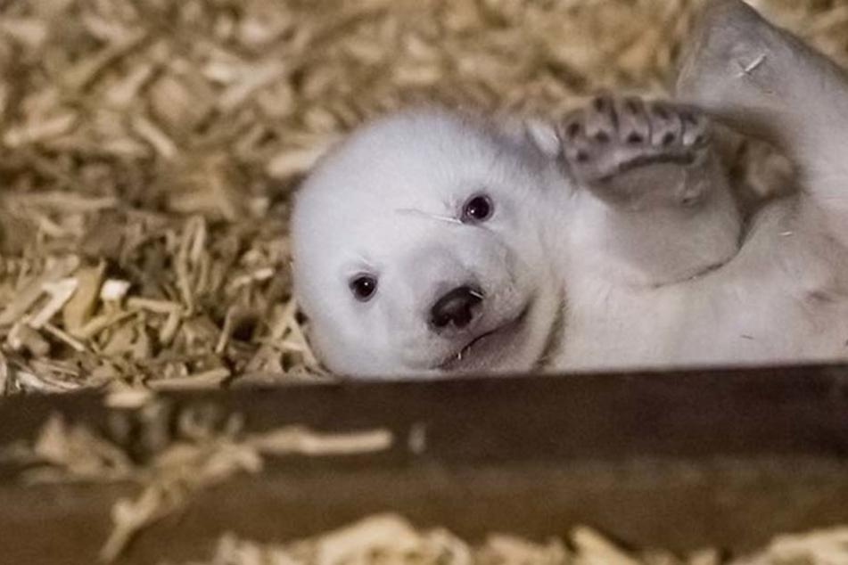 Echter Knuddel-Alarm im Berliner Tierpark!