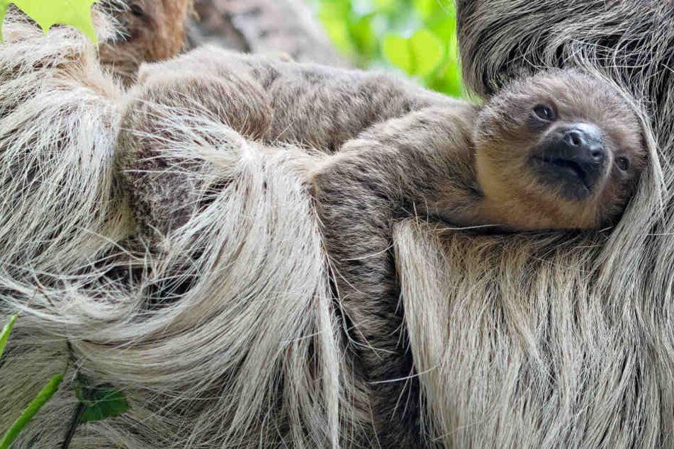 Eines steht lange fest: In den bayerischen Zoos lässt es sich gut aushalten. (Archivbild)