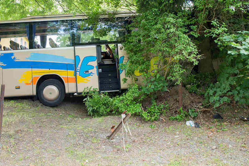 Der Bus mit 49 Insassen krachte gegen einen Baum.