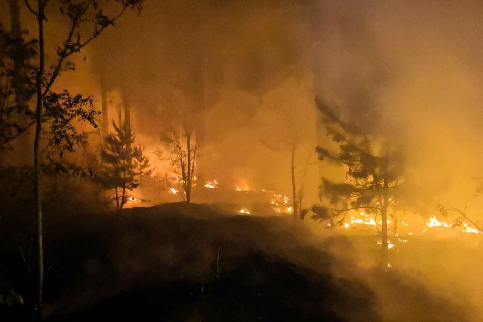 Die Waldbrandgefahr steigt in Teilen NRWs auf die höchste Stufe. (Symbolbild)