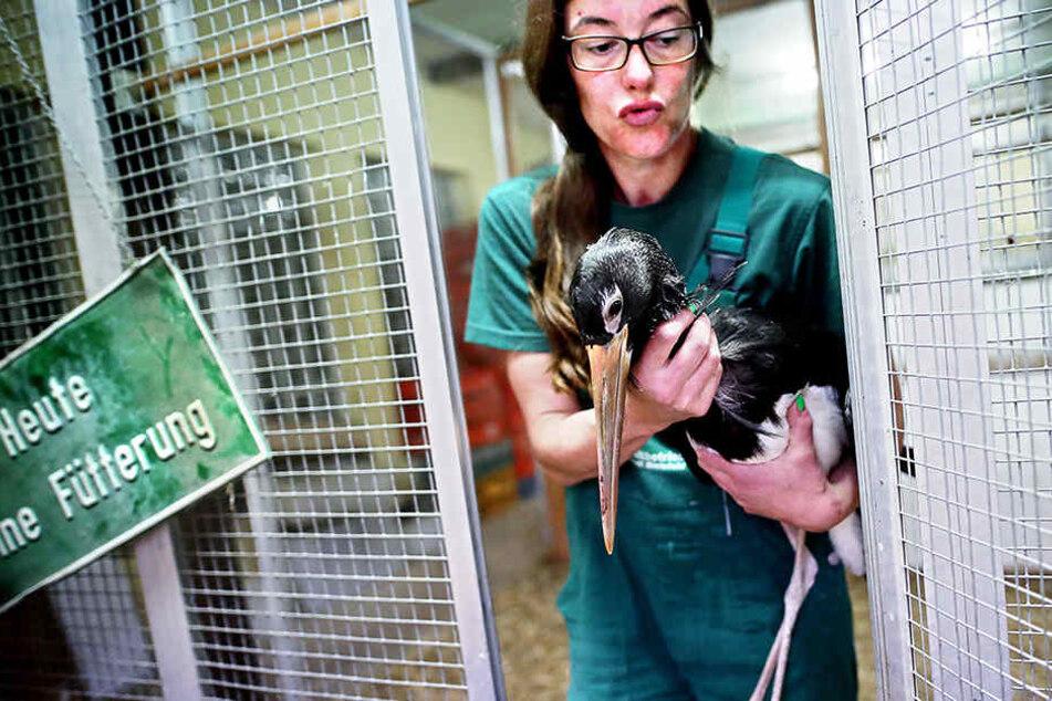 Adieu: Zwei Jung-Vögel müssen Bielefeld verlassen